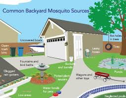 Common backyard mosquito sources MS Chelmsford and Cambridge
