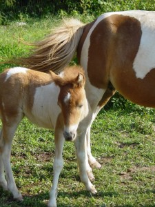 protect horses from mosquitoes