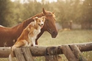 shutterstock_horse_and_dog_West_Nile_Virus_testing